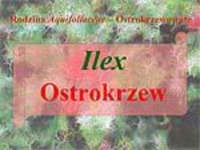 Ilex Ostrokrzew