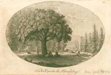 Eine Waldpartie bei Schmiedeberg