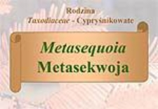 Metasequoia - Metasekwoja