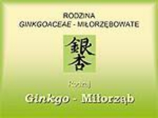 Ginko - Miłorząb